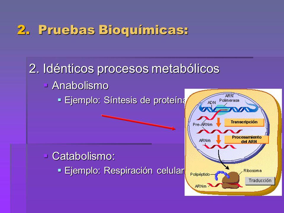 2. Idénticos procesos metabólicos