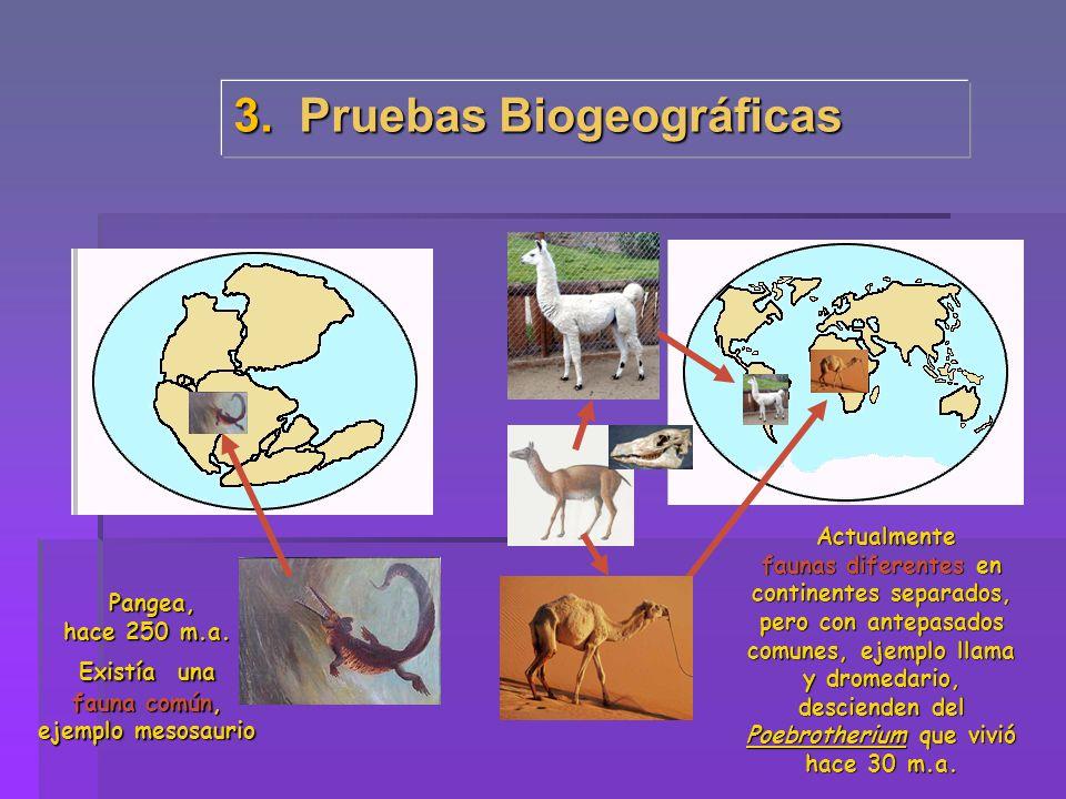 3. Pruebas Biogeográficas