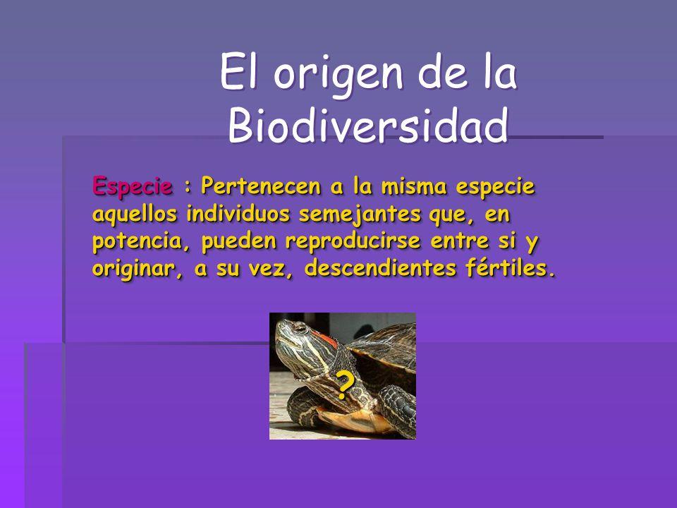 El origen de la Biodiversidad