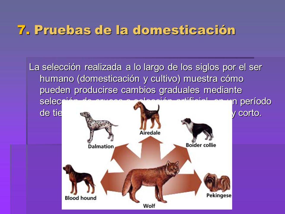 7. Pruebas de la domesticación