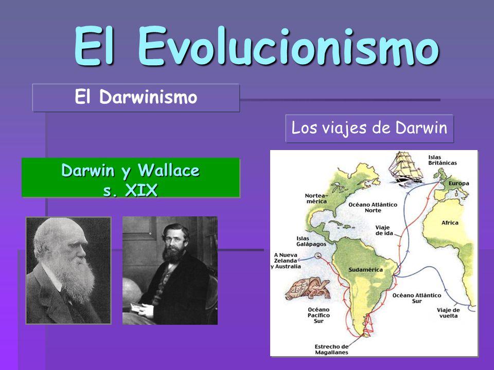 El Evolucionismo El Darwinismo Los viajes de Darwin Darwin y Wallace