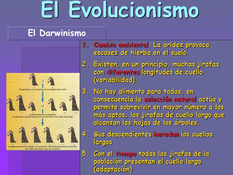 El Evolucionismo El Darwinismo
