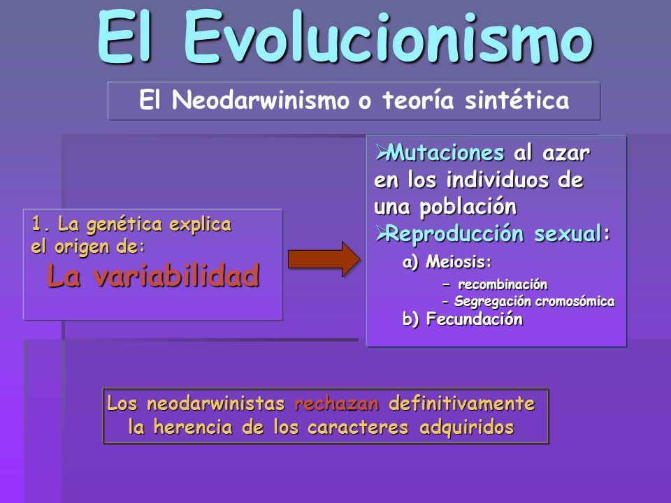 El Evolucionismo El Neodarwinismo o teoría sintética La variabilidad