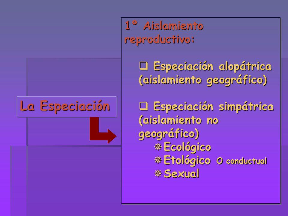 La Especiación 1º Aislamiento reproductivo: