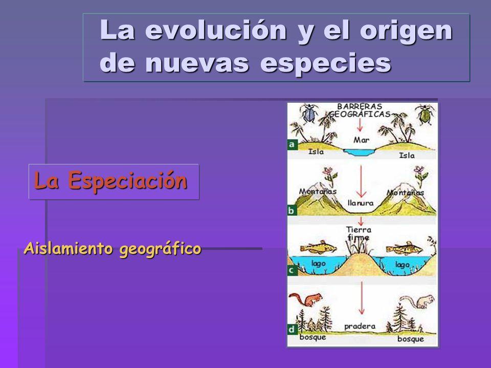 La evolución y el origen de nuevas especies