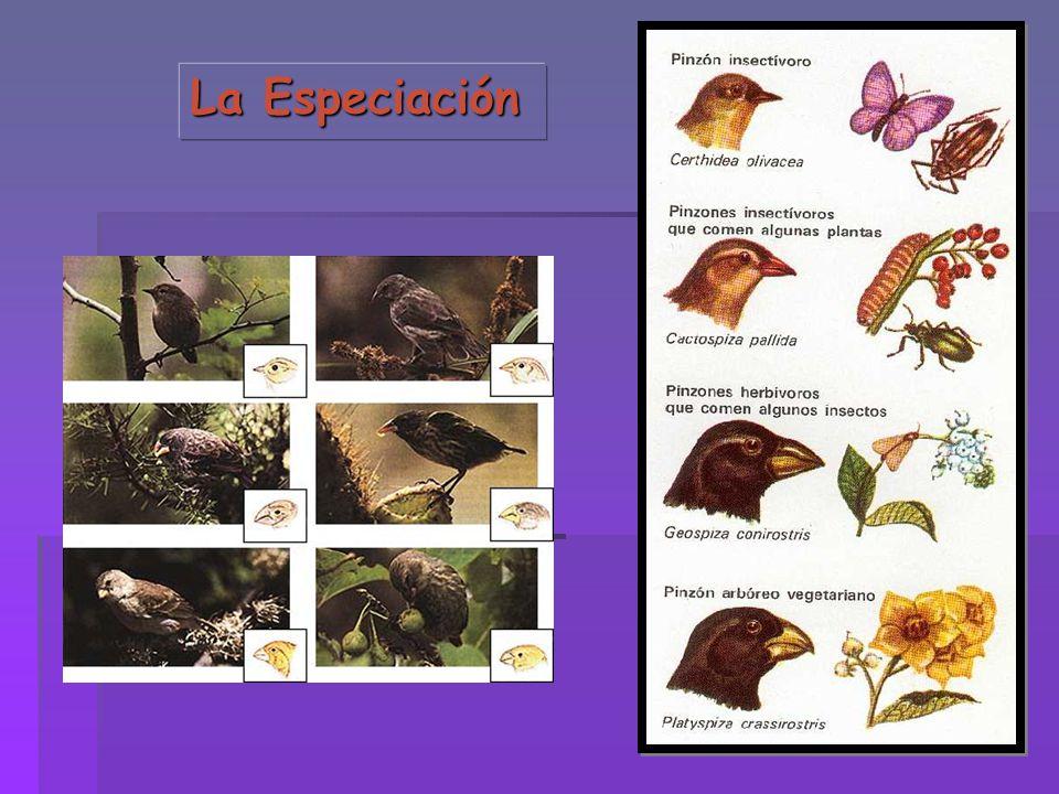 La Especiación