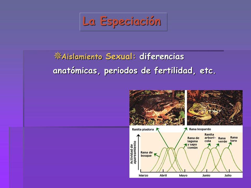 La Especiación Aislamiento Sexual: diferencias anatómicas, periodos de fertilidad, etc.