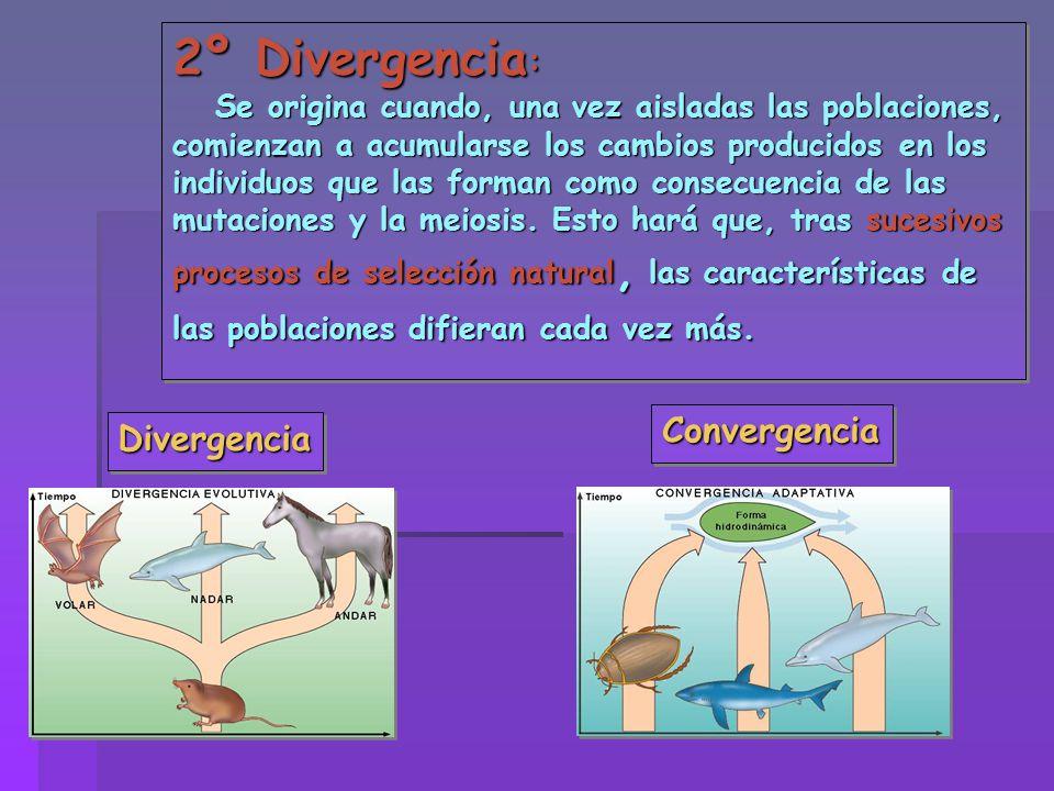 2º Divergencia: