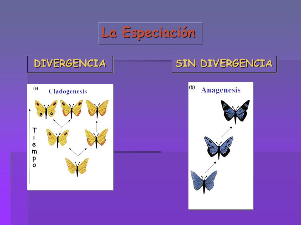 La Especiación DIVERGENCIA SIN DIVERGENCIA