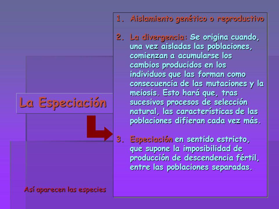 La Especiación Aislamiento genético o reproductivo