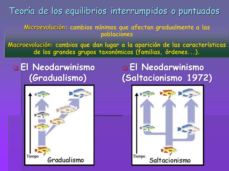 Teoría de los equilibrios interrumpidos o puntuados
