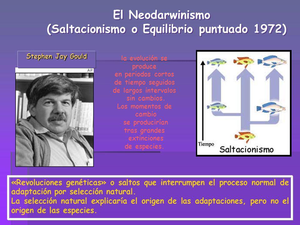 (Saltacionismo o Equilibrio puntuado 1972) la evolución se produce