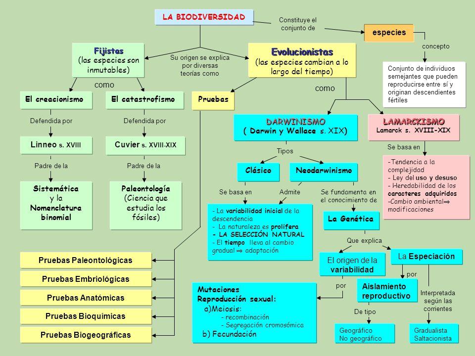Pruebas Paleontológicas Pruebas Embriológicas Pruebas Biogeográficas