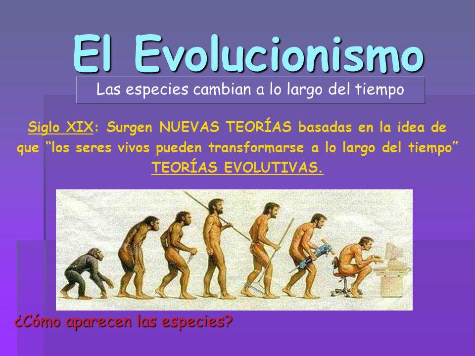 Las especies cambian a lo largo del tiempo