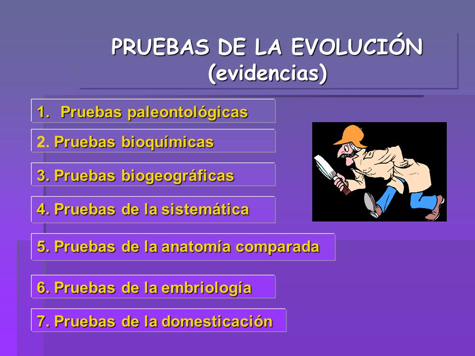 PRUEBAS DE LA EVOLUCIÓN (evidencias)