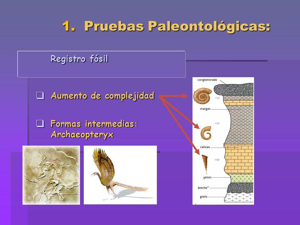 1. Pruebas Paleontológicas: