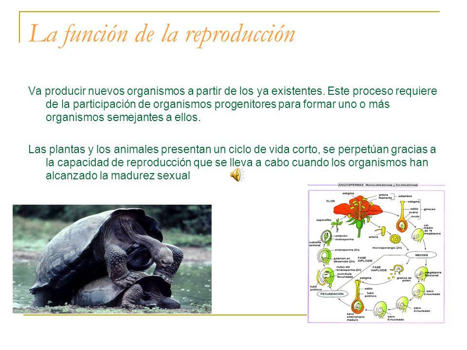 La función de la reproducción