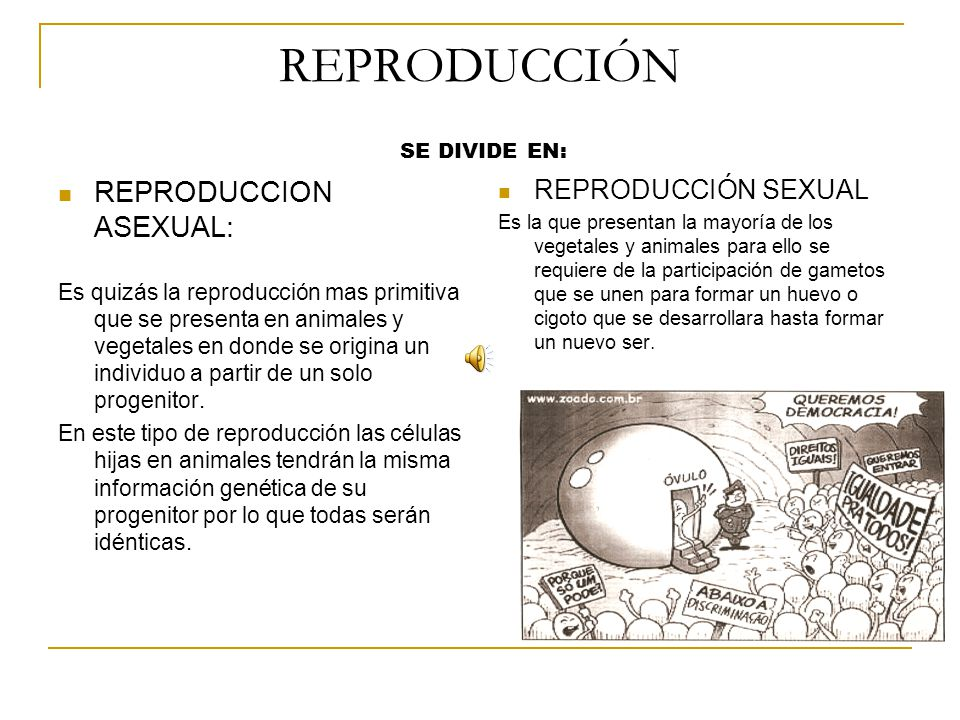REPRODUCCIÓN REPRODUCCION ASEXUAL: REPRODUCCIÓN SEXUAL