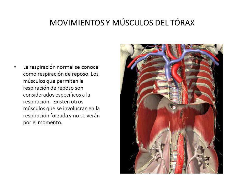 MOVIMIENTOS Y MÚSCULOS DEL TÓRAX