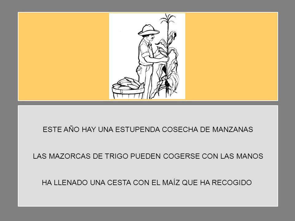ESTE AÑO HAY UNA ESTUPENDA COSECHA DE MANZANAS