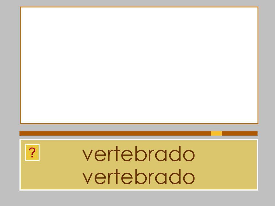vertebrado vertebrado