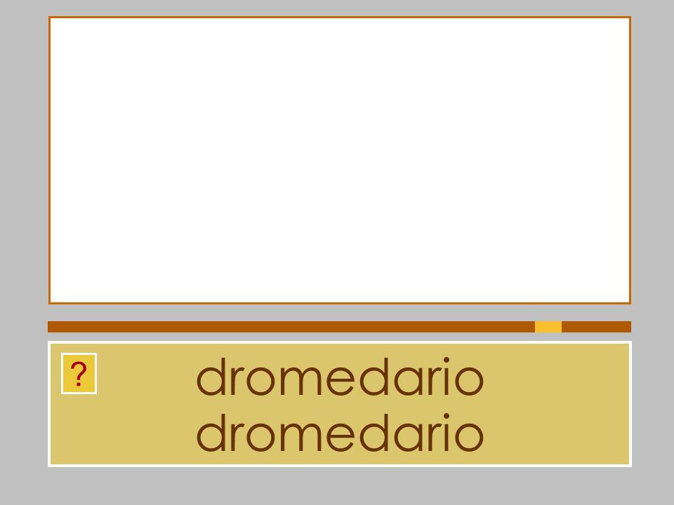dromedario dromedario