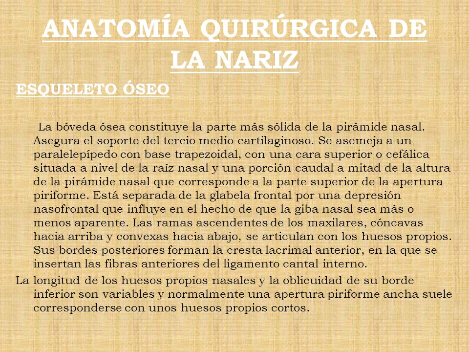 Perfecto Anatomía Quirúrgica De La Nariz Bosquejo - Imágenes de ...