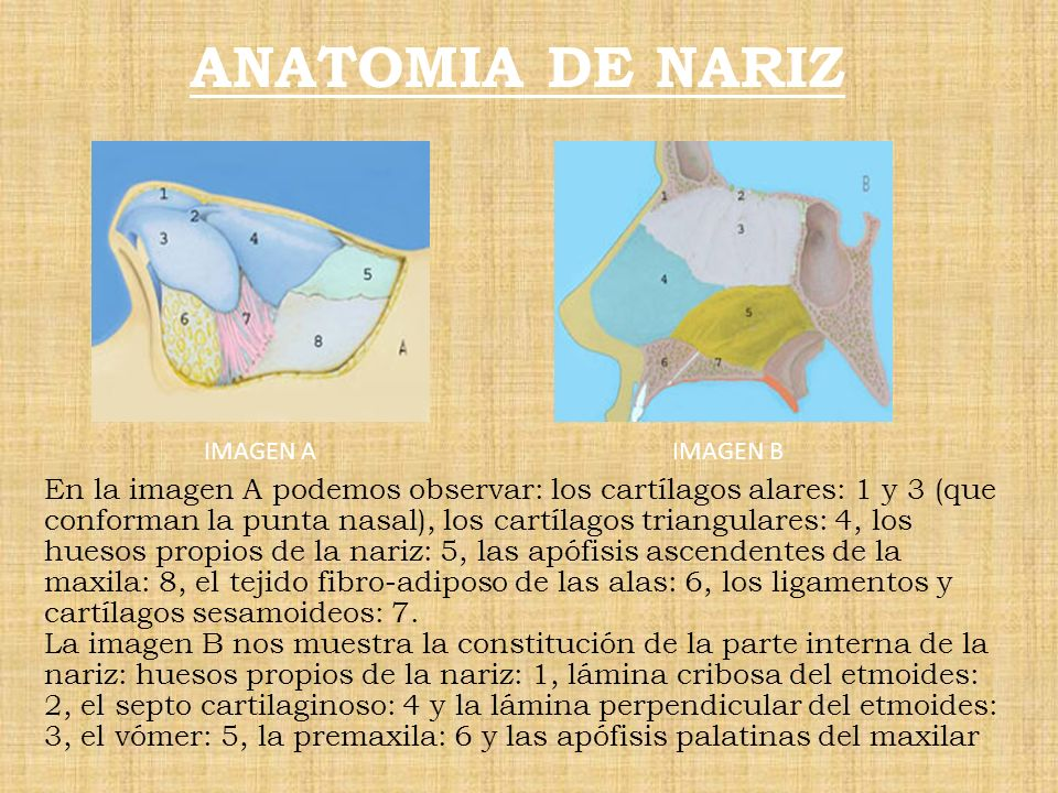 ANATOMIA DE NARIZ IMAGEN A. IMAGEN B.