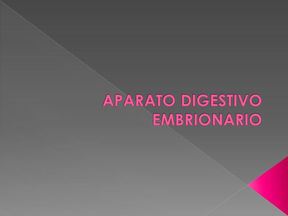 APARATO DIGESTIVO EMBRIONARIO