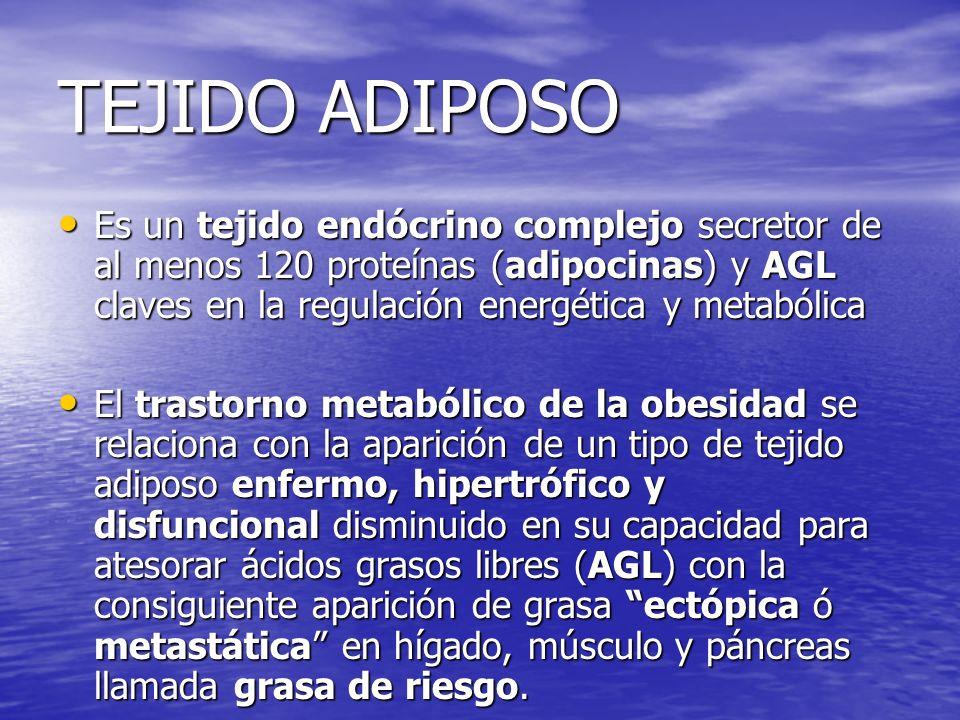 TEJIDO ADIPOSOEs un tejido endócrino complejo secretor de al menos 120 proteínas (adipocinas) y AGL claves en la regulación energética y metabólica.