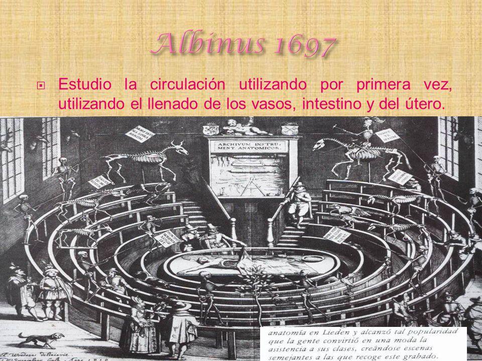 Albinus 1697 Estudio la circulación utilizando por primera vez, utilizando el llenado de los vasos, intestino y del útero.