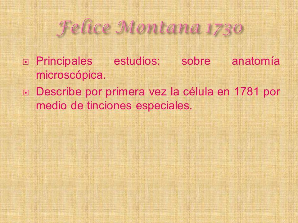 Felice Montana 1730 Principales estudios: sobre anatomía microscópica.