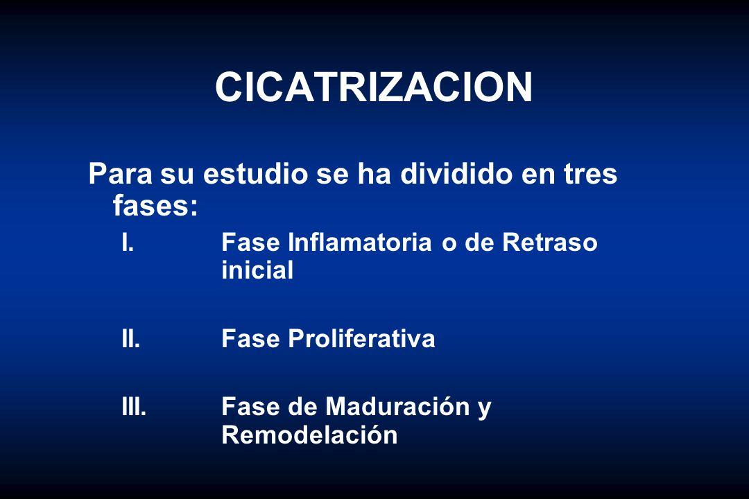 CICATRIZACION Para su estudio se ha dividido en tres fases:
