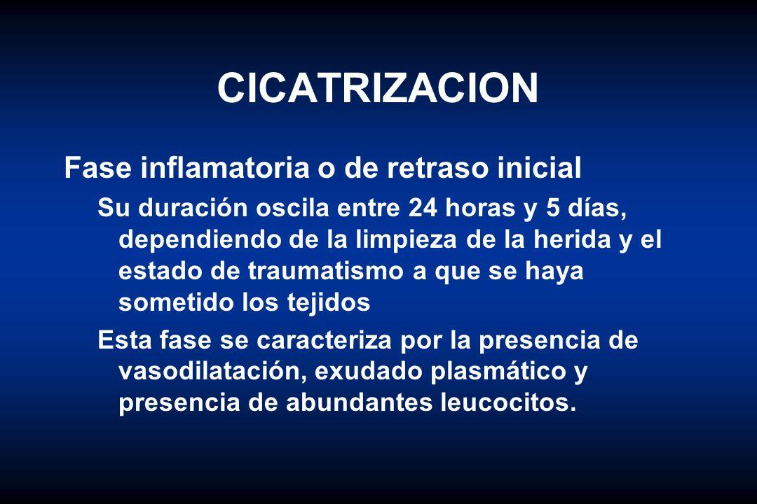 CICATRIZACION Fase inflamatoria o de retraso inicial