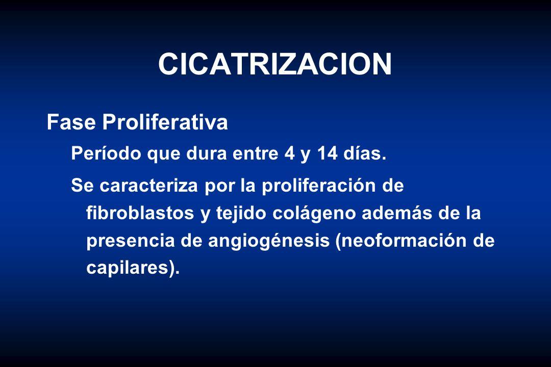 CICATRIZACION Fase Proliferativa Período que dura entre 4 y 14 días.