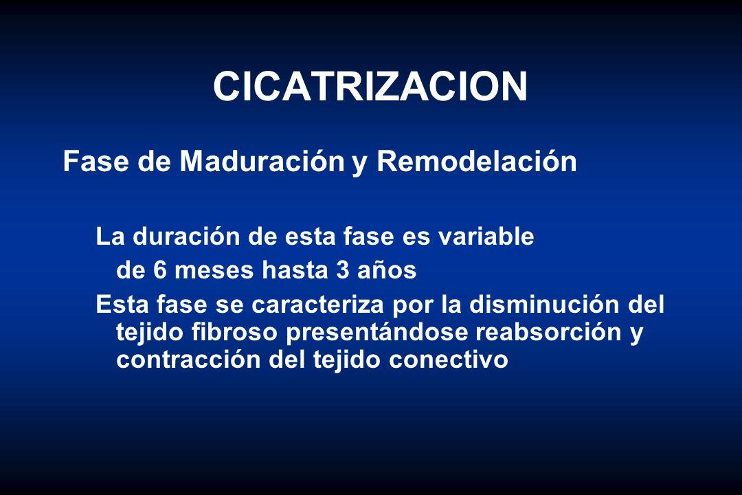 CICATRIZACION Fase de Maduración y Remodelación