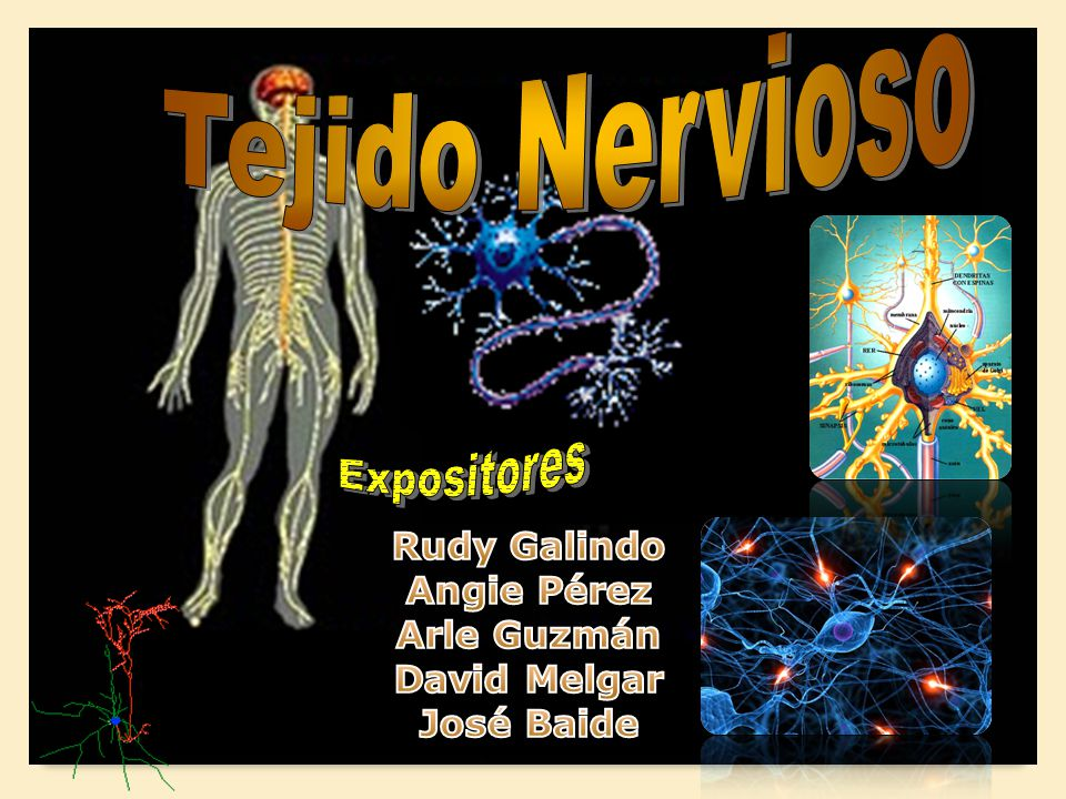 Tejido Nervioso Expositores Rudy Galindo Angie Pérez Arle Guzmán