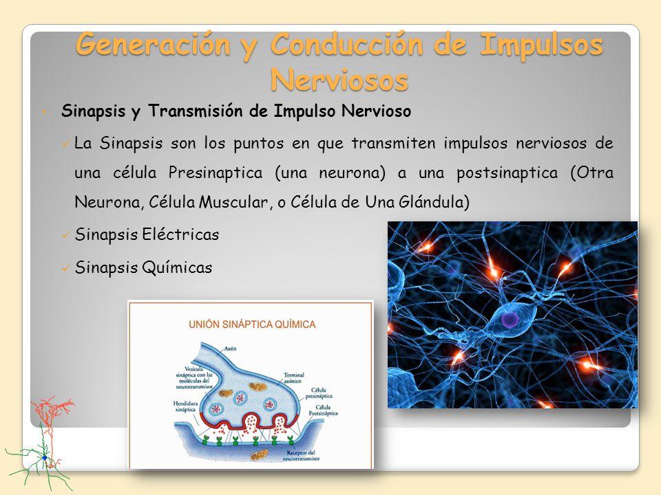 Generación y Conducción de Impulsos Nerviosos