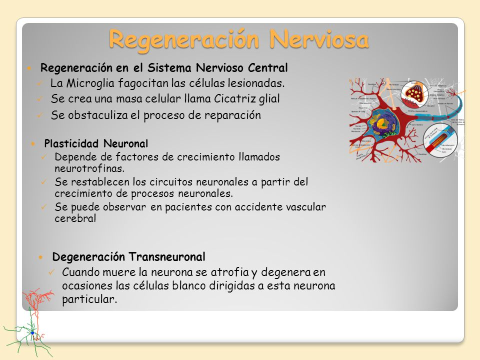 Regeneración Nerviosa