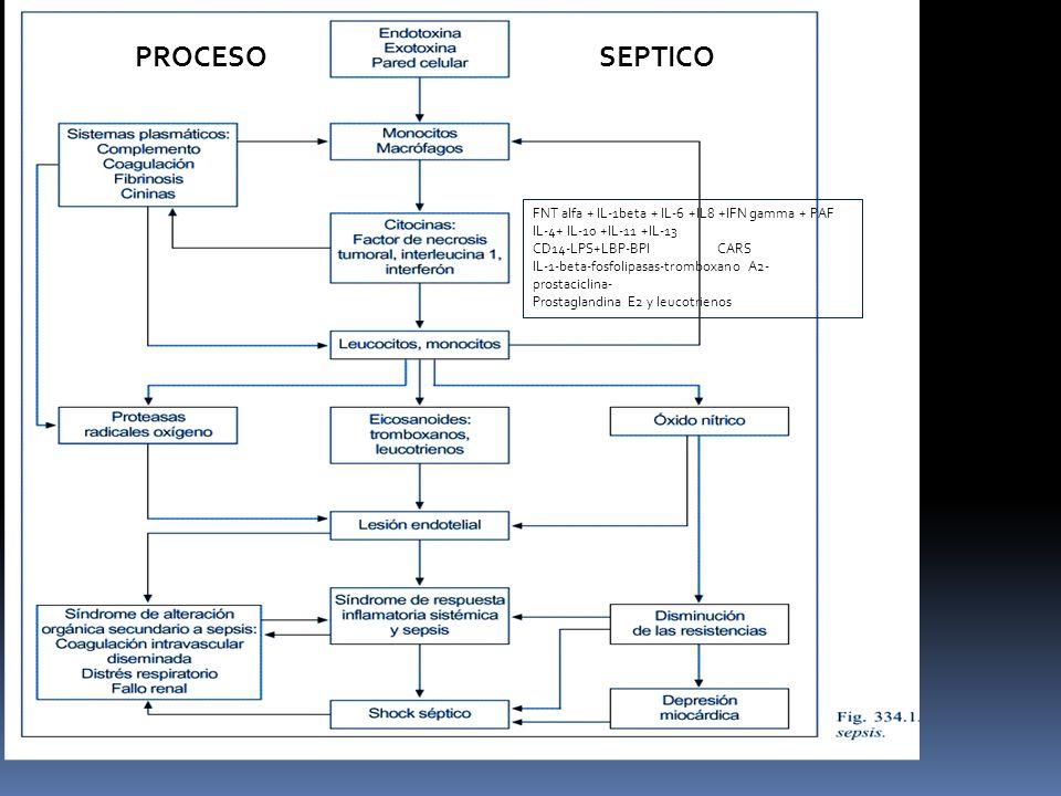 PROCESO SEPTICO FNT alfa + IL-1beta + IL-6 +IL8 +IFN gamma + PAF