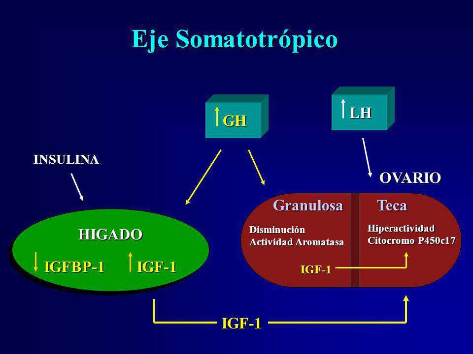 Eje Somatotrópico LH GH OVARIO Granulosa Teca HIGADO IGFBP-1 IGF-1