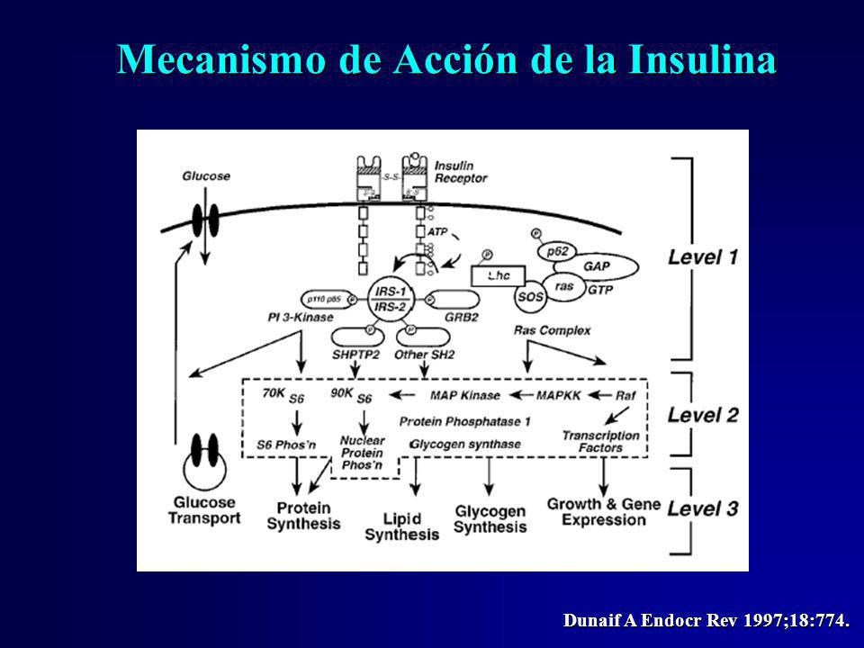 Mecanismo de Acción de la Insulina