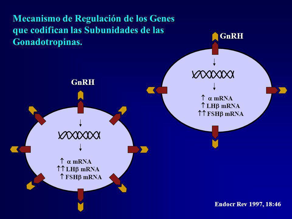 Mecanismo de Regulación de los Genes