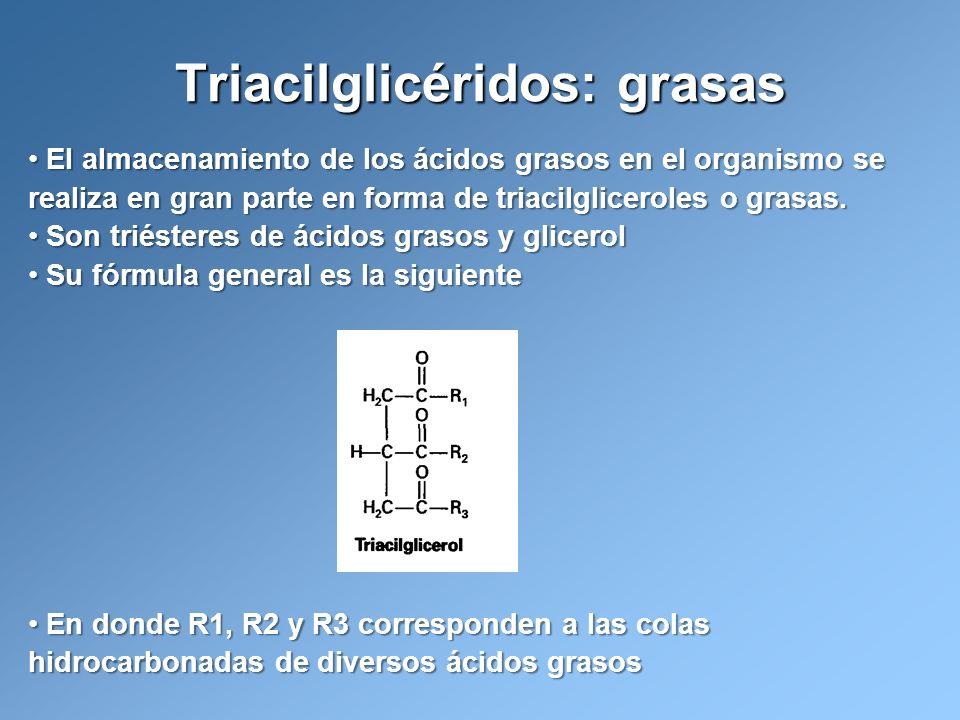Triacilglicéridos: grasas