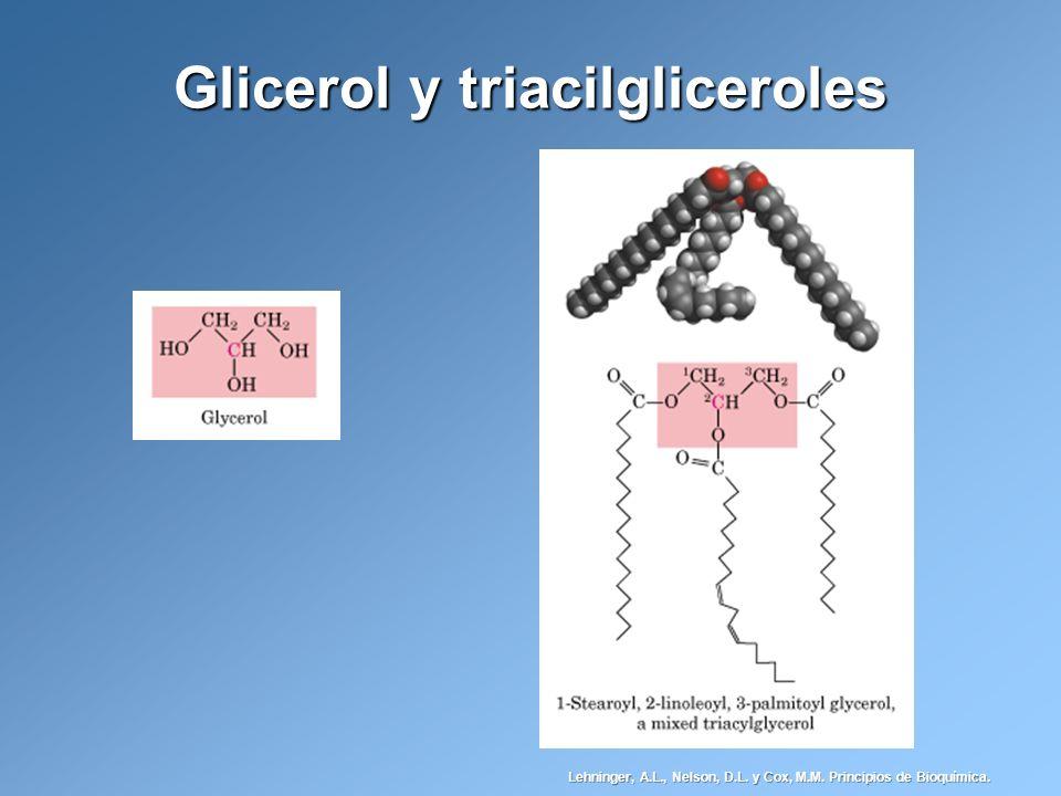 Glicerol y triacilgliceroles