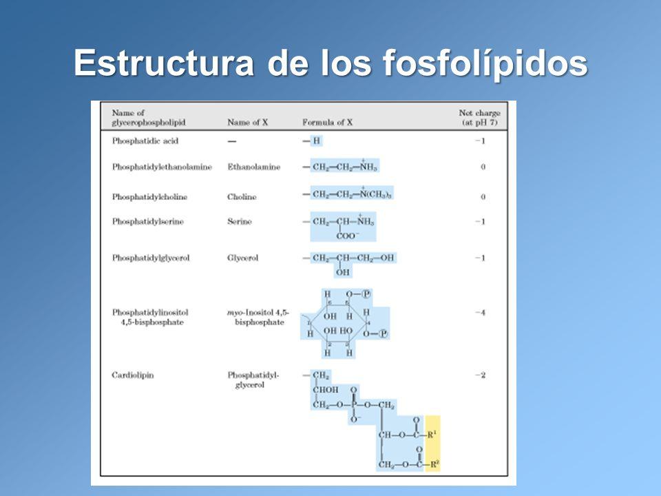 Estructura de los fosfolípidos
