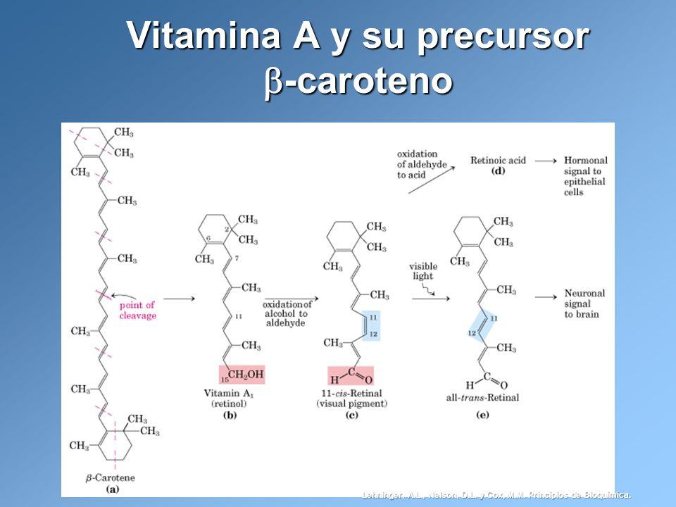 Vitamina A y su precursor -caroteno