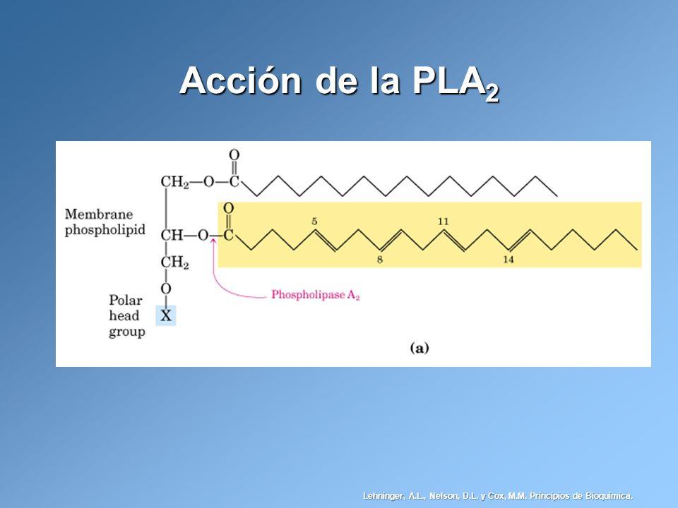 Acción de la PLA2 Lehninger, A.L., Nelson, D.L. y Cox, M.M. Principios de Bioquímica.