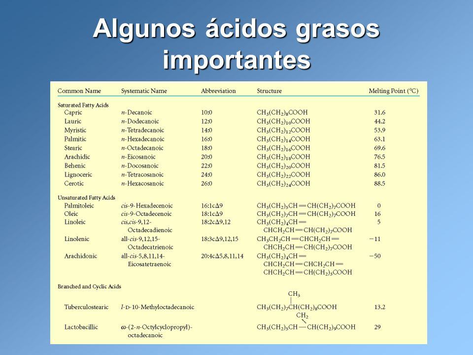 Algunos ácidos grasos importantes