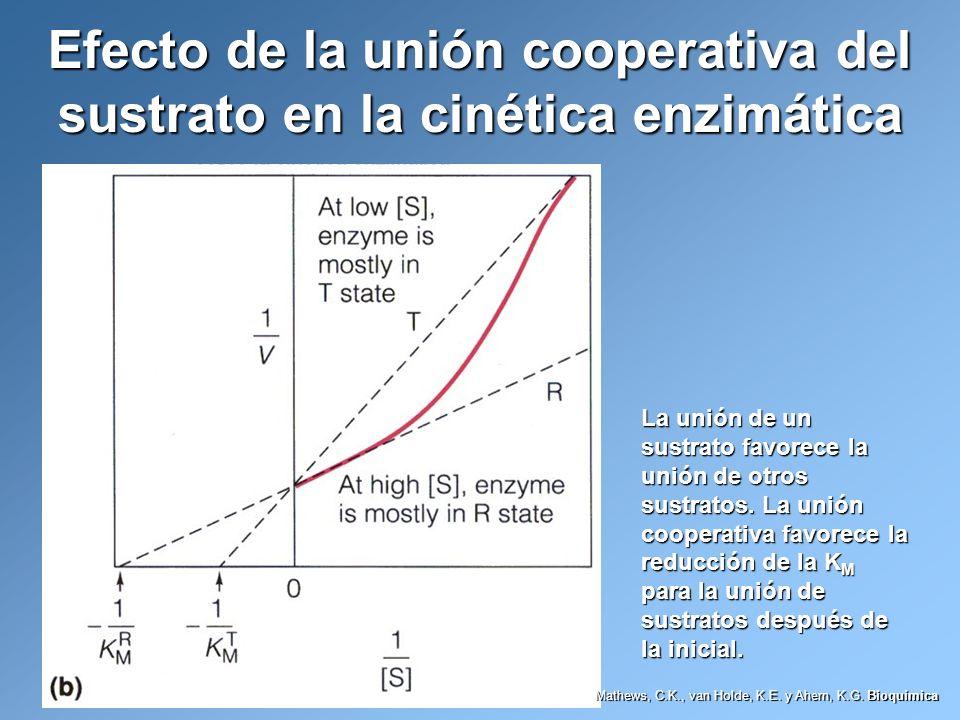 Efecto de la unión cooperativa del sustrato en la cinética enzimática